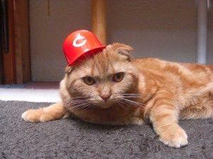 カープ猫2