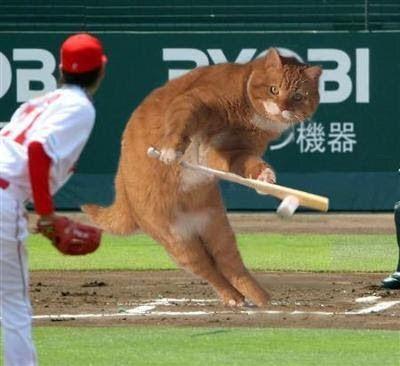 カープ猫4