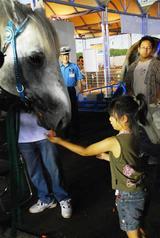 ばん馬競争馬