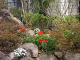 桜の杜の写真-21