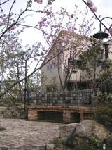 桜の杜の写真-15