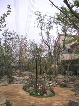 桜の杜の写真-16