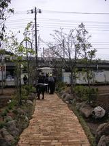 桜の杜の写真-25