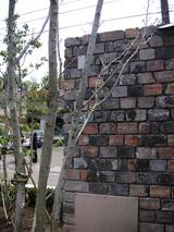 桜の杜の写真-24