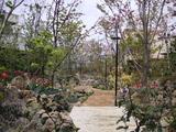 桜の杜の写真-20