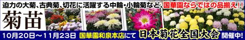 国華園オンラインショップ・菊苗販売