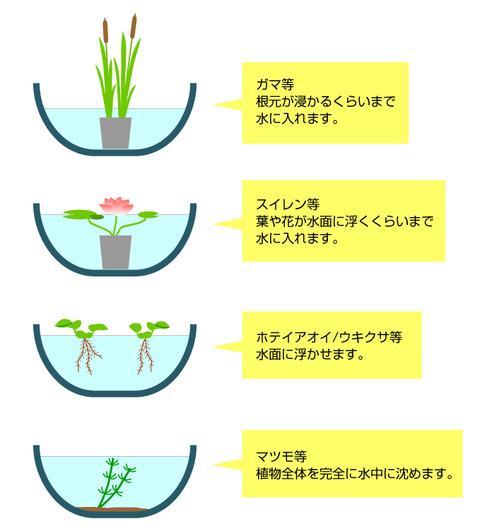 睡蓮鉢画像4