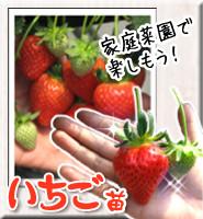 ichigo-top