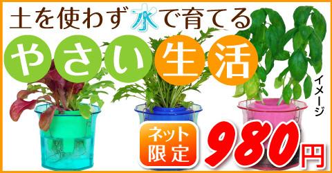 yasai-sblog