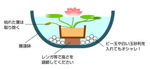 睡蓮鉢画像2