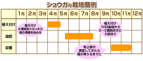 ショウガの栽培表