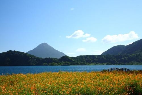 池田湖菜の花