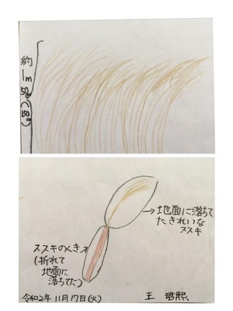 【日本語チューター】曽爾高原(そにこうげん)