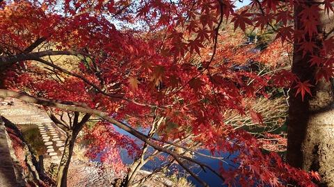 【日本語チューター】紅葉(こうよう)