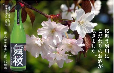 201104maizakurasakae2