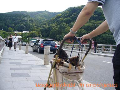 カート嵐山