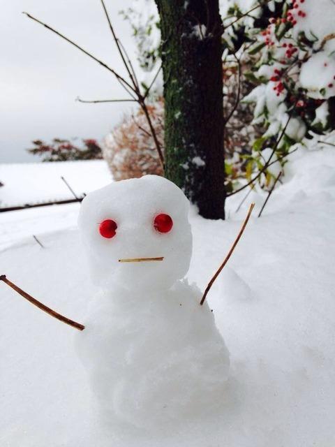 大雪のため臨時休業 ⛄️