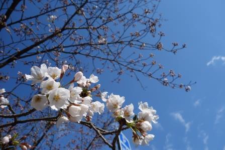 待ってました!春