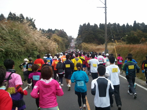 菜の花マラソン2012-13