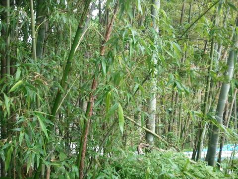 竹で柵作り1