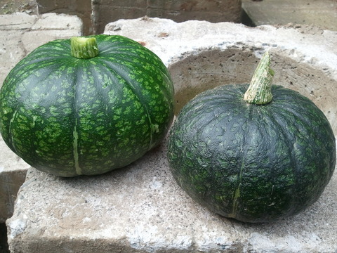 郡山農場 かぼちゃ2