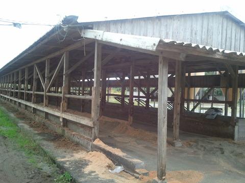 西ファーム前牛舎2