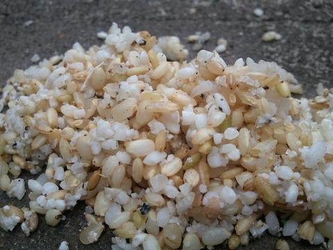 飼料米つまる