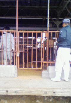 種豚市場2