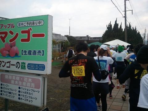 菜の花マラソン2012-7
