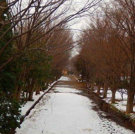 雪の鶴間公園