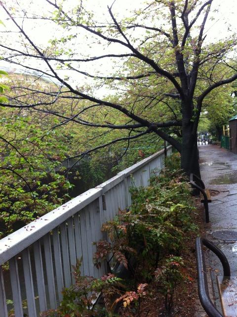 神田上水公園71