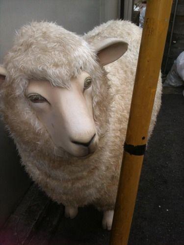 加藤夏希さんとリアルすぎる羊