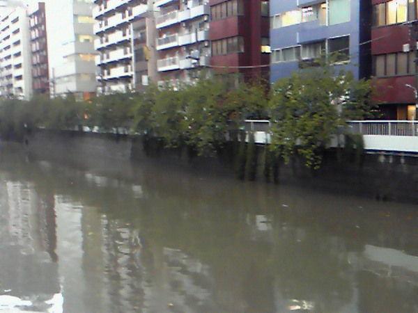 東京大雨7