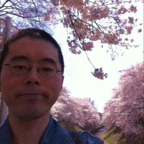 善福寺川の桜33a