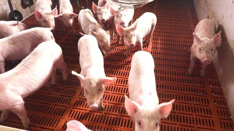 人にうつる新型豚インフルが見つかる、パンデミックの恐れも 中国