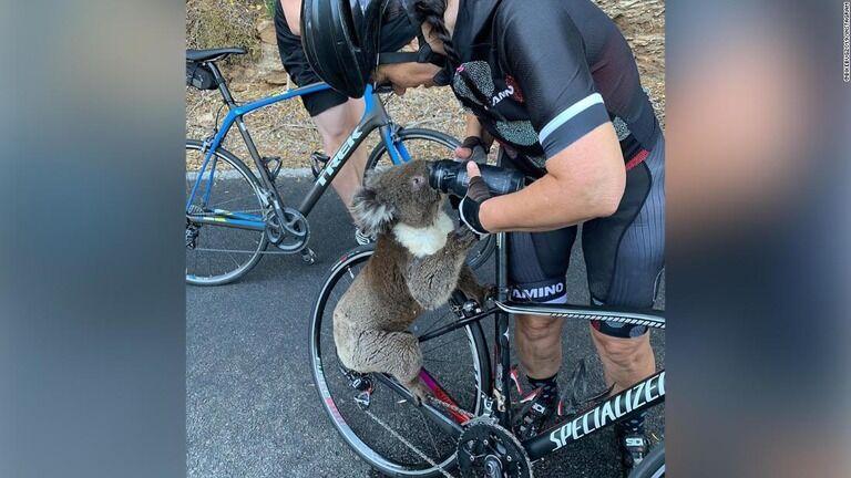 熱波で喉カラカラ、コアラがサイクリング隊の水を飲み干す 豪
