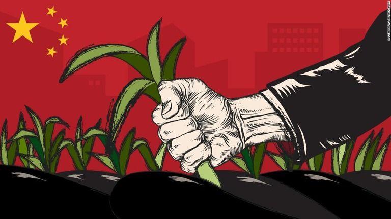 「我々はニラにように摘み取られる」 中国の中流層の嘆き
