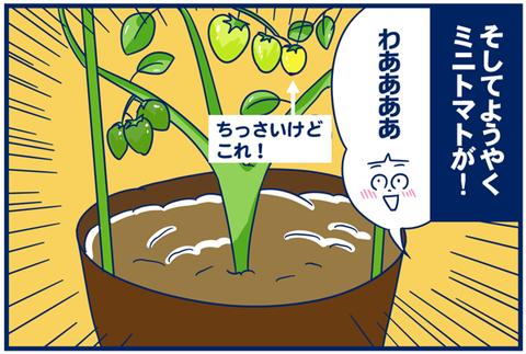 【4コマ+数コマ】トマトはおやつ。