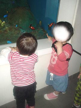 双子を授かっちゃいましたヨ☆-0630水族館01