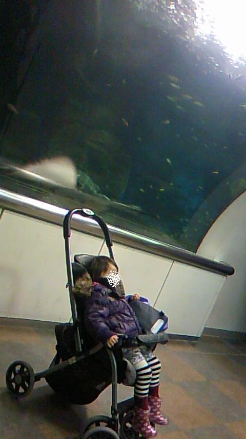 双子を授かっちゃいましたヨ☆-0113水族館02