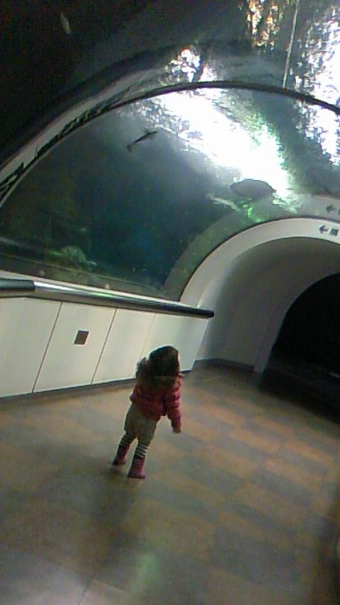双子を授かっちゃいましたヨ☆-0113水族館01
