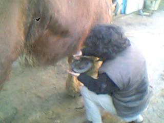 蹄の泥を掻く作業
