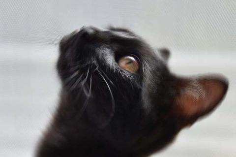 cat-1507603_640