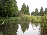雨上がりの川口自然公園(2)