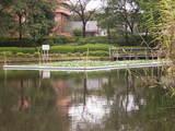 雨上がりの川口自然公園(5)
