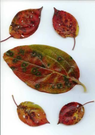 桜紅葉・柿紅葉
