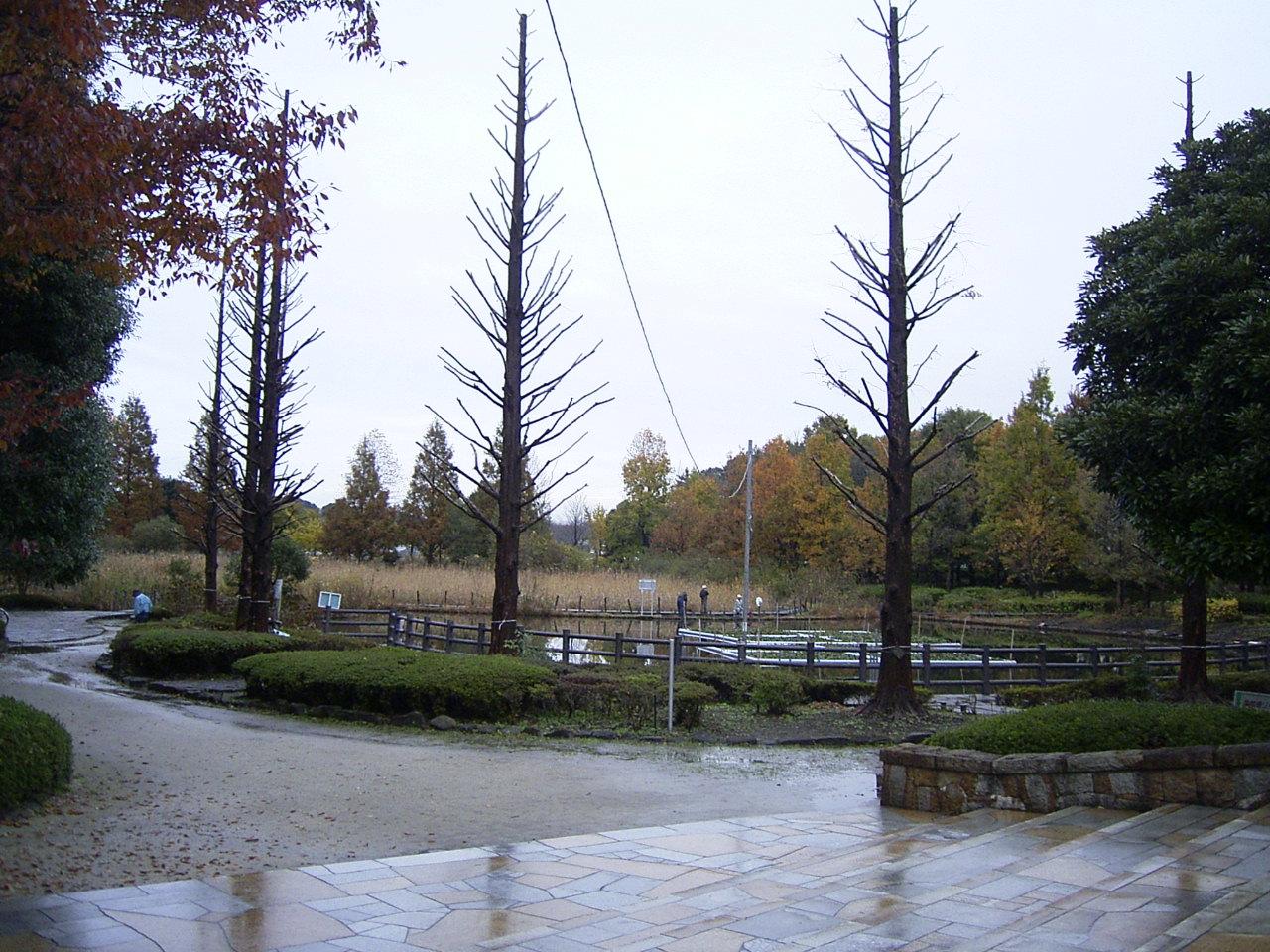 自然公園紅葉1