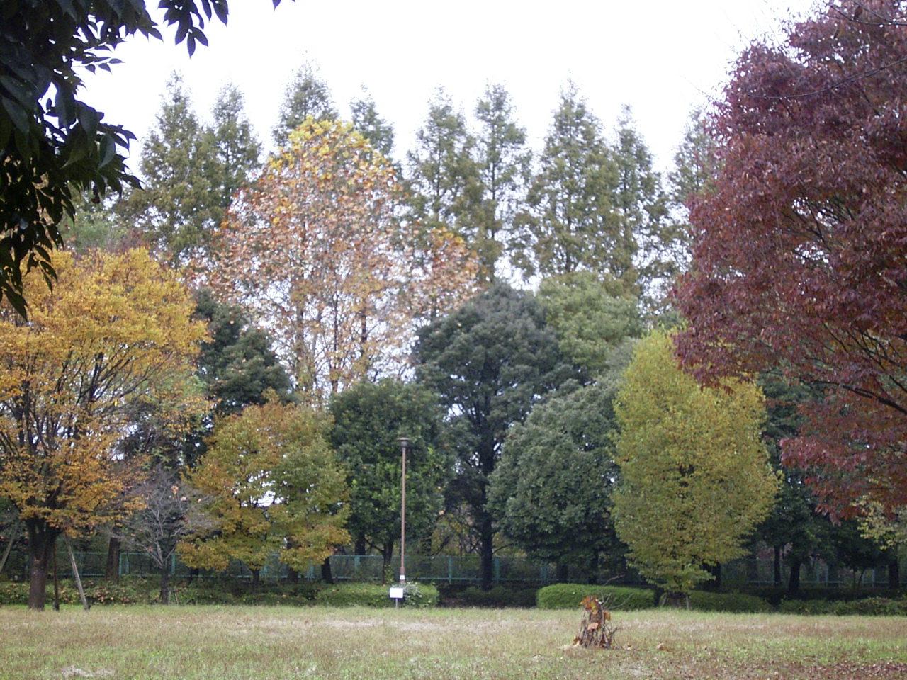 自然公園紅葉3