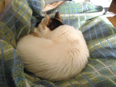 眠猫(みっちゃん)