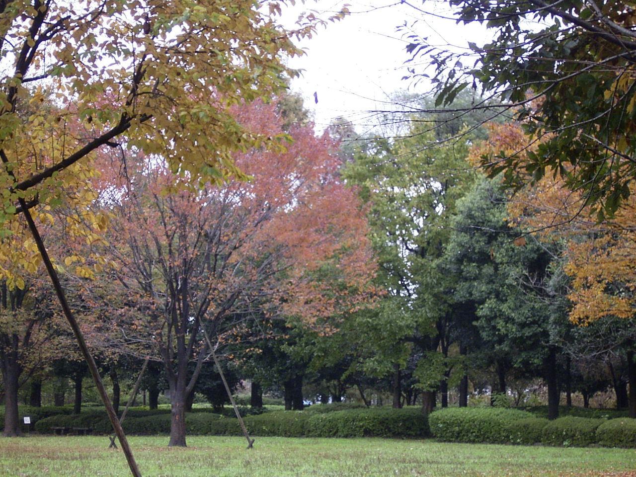 自然公園紅葉4